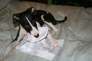 My-dog-ate-my-homework-